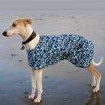 Whippet Coat modelled by Silver