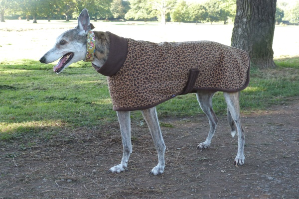 Greyhound Coat in Leopard Fleece with Chocolate Trim