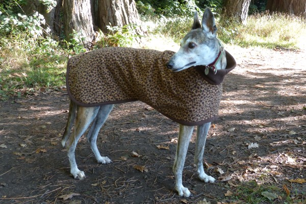 Greyhound Coat in Leopard with Chocolate Trim Fleece
