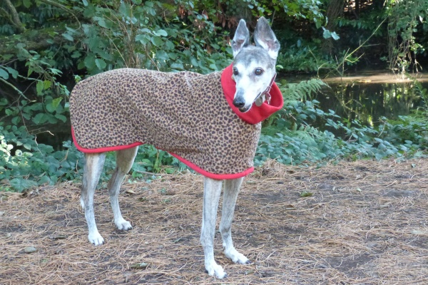 Greyhound Coat in Leopard with Red Trim Fleece