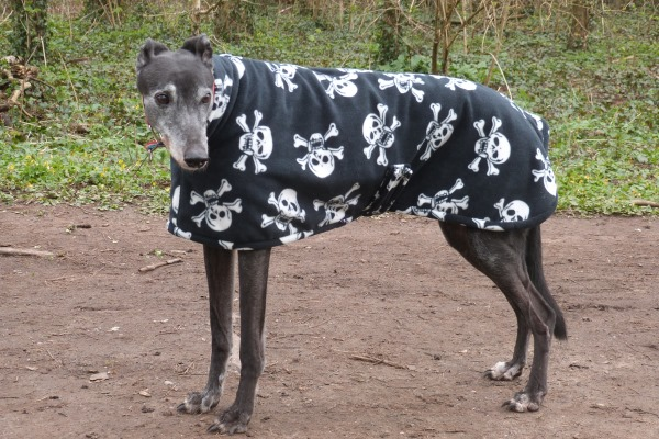greyhound coat in skull and bones fleece