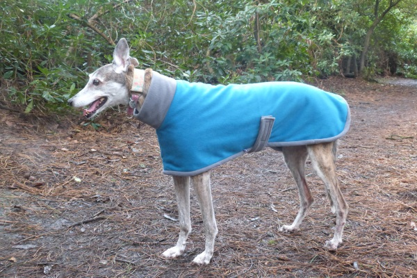 greyhound coat in teal and grey fleece