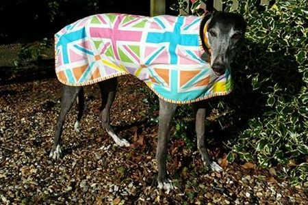 bespoke greyhound walking out coat in union jack design
