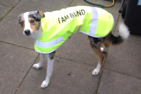 hi viz dog coat with lettering