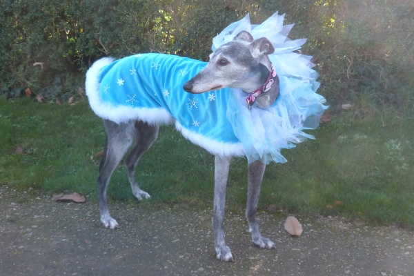 milgi coats snow princess greyhound coats