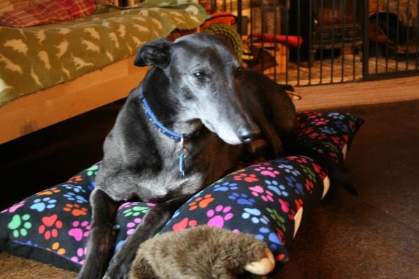 milgi coats - dog beds, greyhound dog beds, lurcher beds, whippet