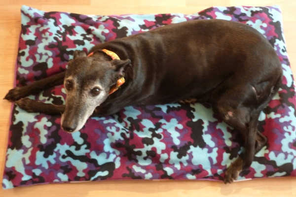 dog bed in purple camo