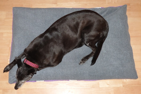 Milgi Coats Dog Beds Greyhound Dog Beds Lurcher Beds