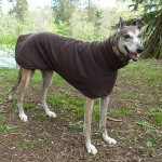 dark chocolate brown greyhound coat