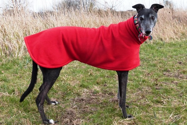 greyhound coat in bright red fleece