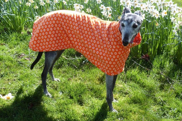 Cosmic Orange fleece coat for greyhounds lurchers and whippets