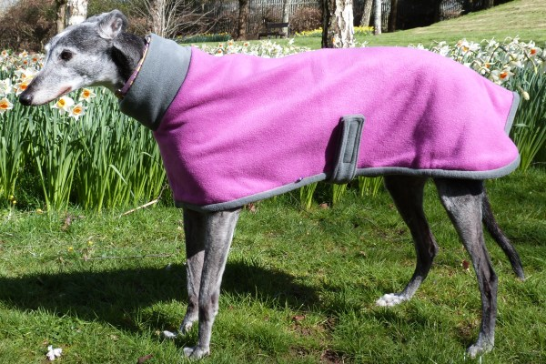 Fuchsia and Charcoal fleece coat for greyhounds lurchers and whippets