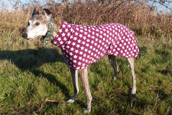 greyhound lurcher whippet fleece coat in very berry design