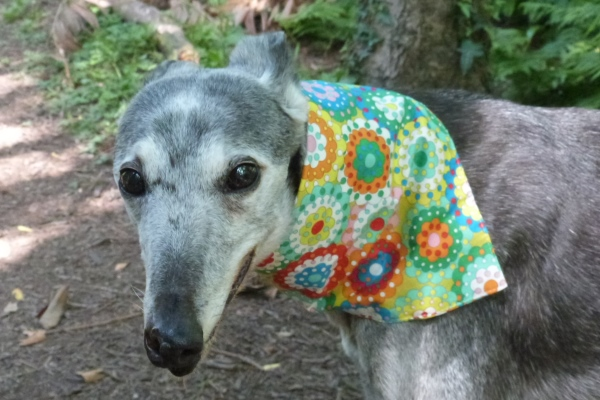 green spirals greyhound bandana