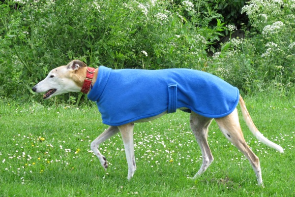 greyhound fleece coat in royal blue