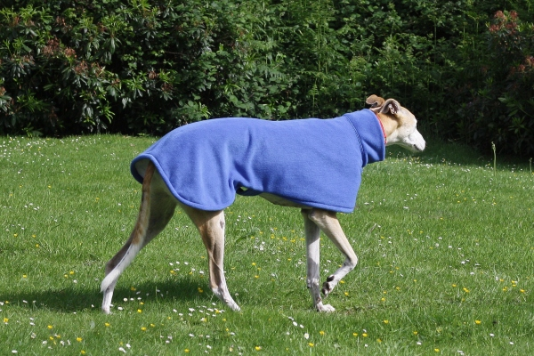 royal blue greyhound fleece coat
