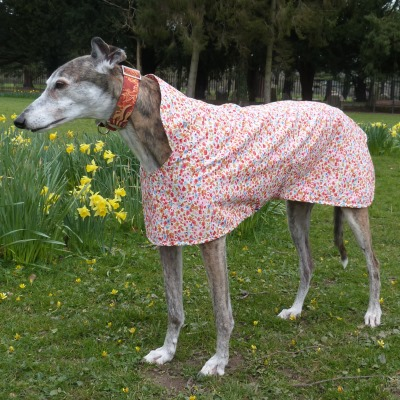 coral floral greyhound walking out coat