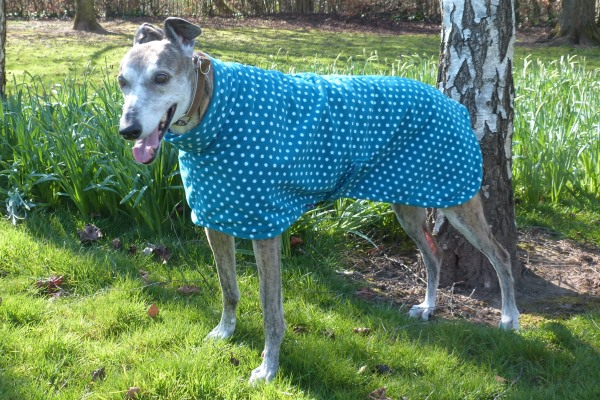 greyhound coat in teal spot fleece