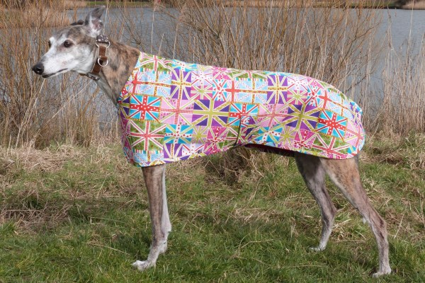 greyhound coat in union jack fabric