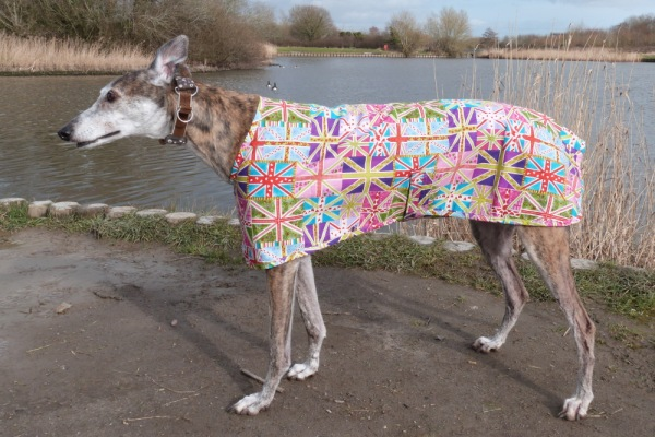 greyhound union jack walking out coat