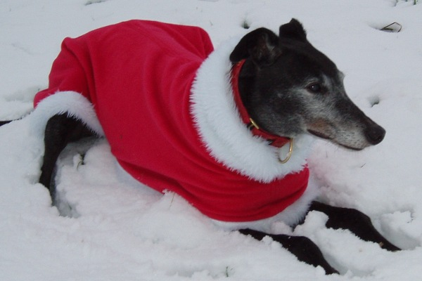 greyhound coats - christmas fleece coat