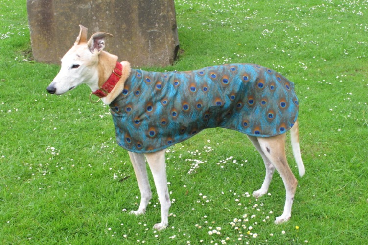 Peacock Coat for greyhounds lurchers and whippets