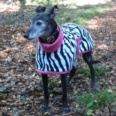 Lurcher Fleece Coat in Zebra Design With Pink Trim