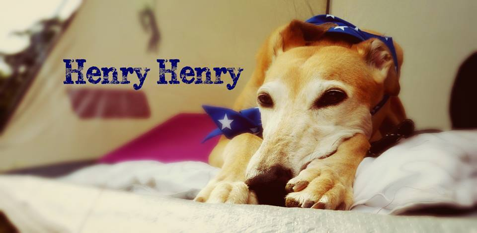 Milgi Coats Reserve Best in Show 2015 Henry Henry Greyhound
