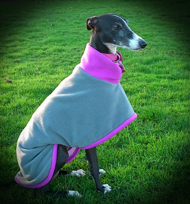 Milgi Coats Winner Golden Oldies 2015 Betani Galgo