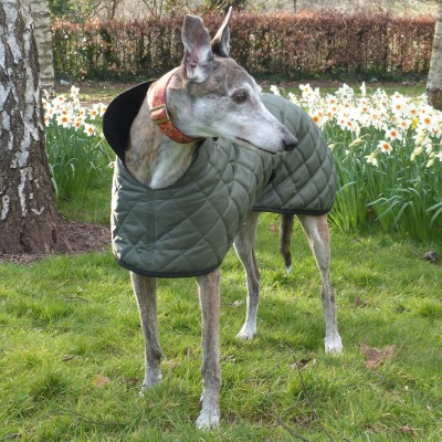 quilted greyhound coat