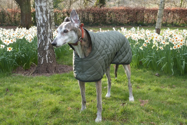 Greyhound Quilted Coat in Olive Green