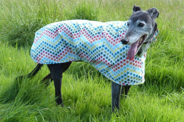 Raincoat for Greyhounds Lurchers and Whippets in Five Star General Fabric
