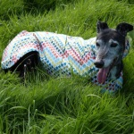 five star general rain coat for greyhounds