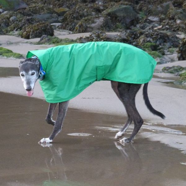 Raincoat for Greyhounds Lurchers and Whippets in Emerald Green