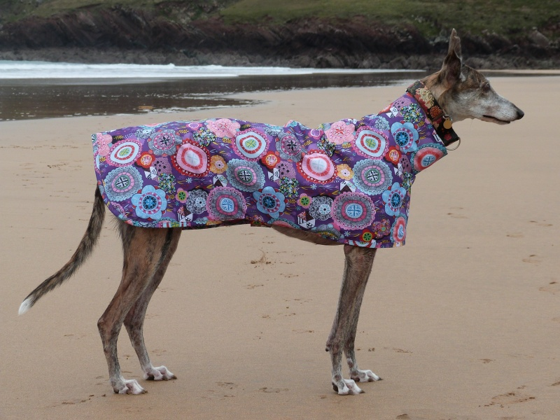 Purple Haze Raincoat for Greyhounds Lurchers and Whippets