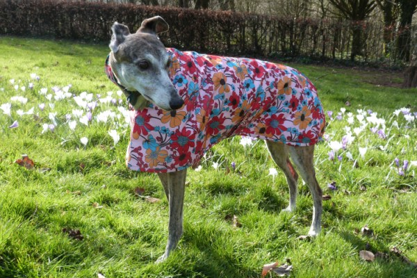 Raincoat for Greyhounds Lurchers Whippets in Bohemian Blooms Fabric
