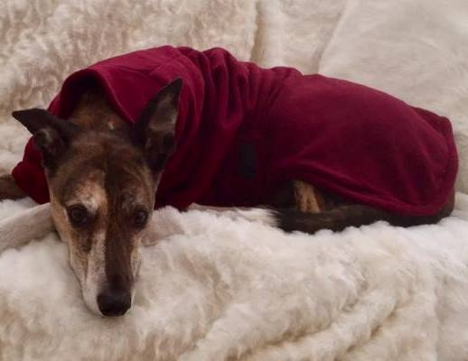 brindle lurcher in bramble coloured fleece coat