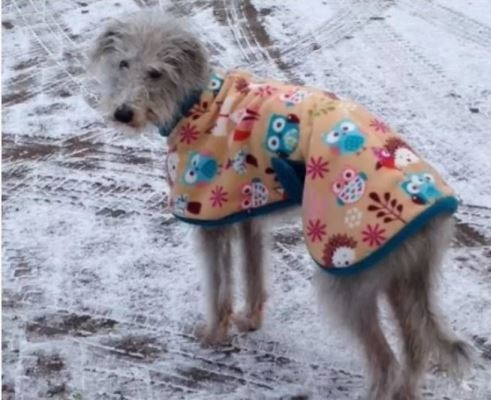 lurcher coat for grey lurchers