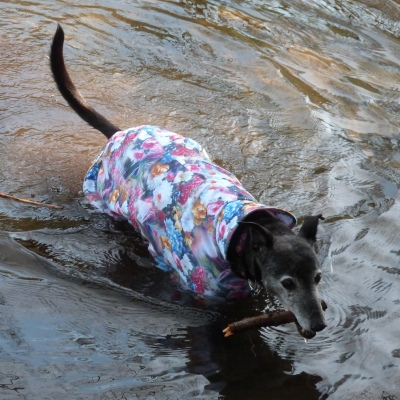 greyhound lurcher and whippet waterproof coat in scuba fabric