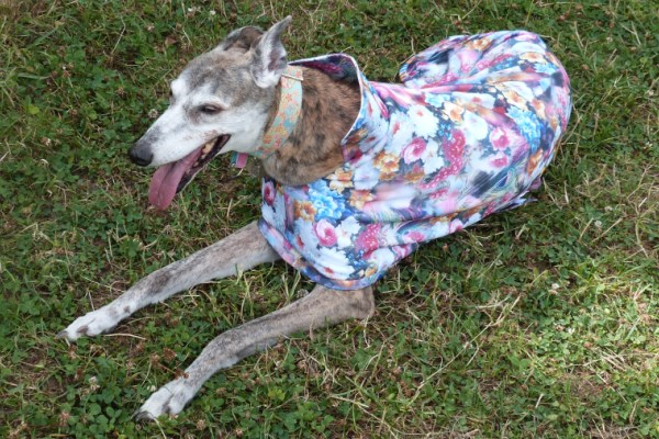 greyhound raincoat in scuba fabric