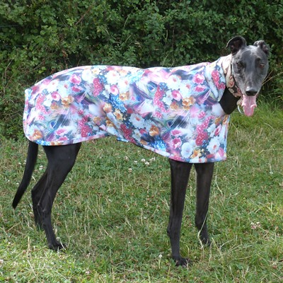 jack modelling moonlight garden scuba coat for greyhounds and lurchers