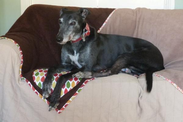 Milgi Coats Dog Beds Greyhound Dog Beds Lurcher Beds Whippet Dog Beds