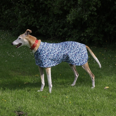 Greyhound Walking Out Coat in Blue Stars