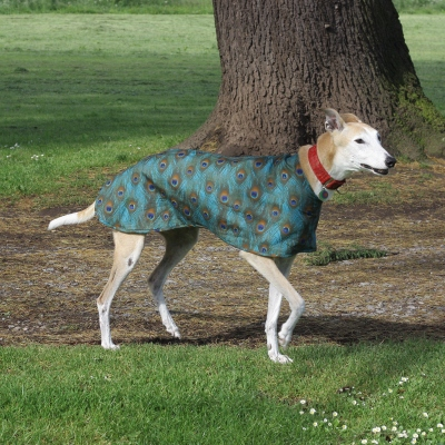Milgi Coats Peacock Greyhound Walking Out Coat