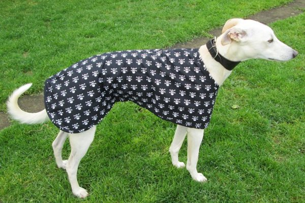 skulls walking out coat for greyhounds
