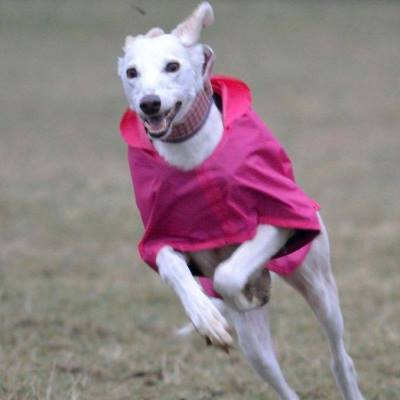 greyhound waterproof coat in cerise