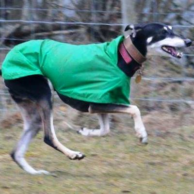 greyhound waterproof coat made in uk